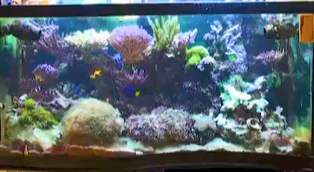 Ryan's first reef tank after 24 months