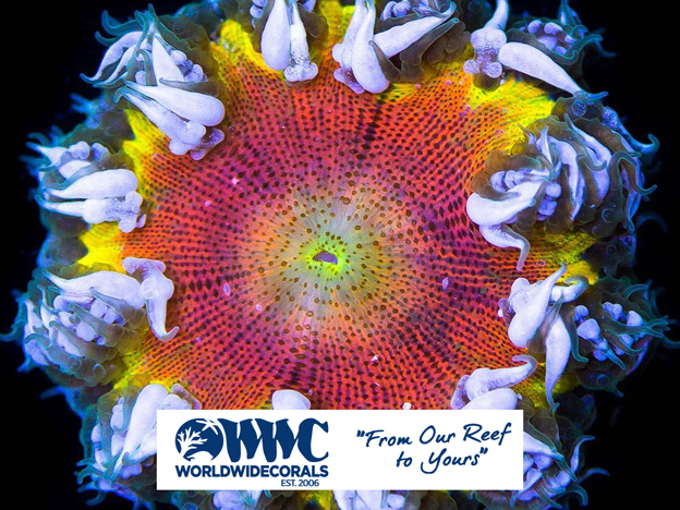 WWC Flower Anemone with Logo
