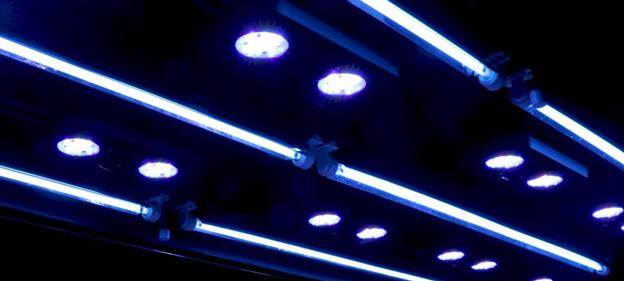 WWC 900 gallon display tank lighting system