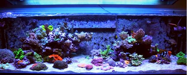 52 weeks of reefing BRS160