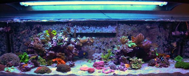 BRS160 Aquarium Full Tank Shot
