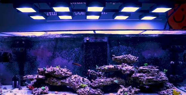 BRS lobby tank Radion XR15 LED light grid