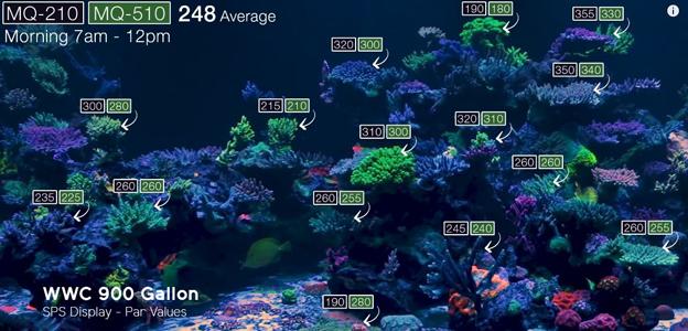 WWC par values in 900 gallon SPS display tank