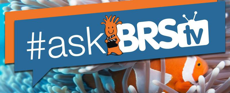 ASKBRSTV Logo