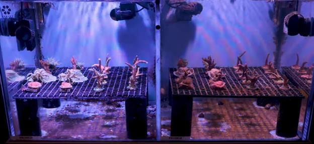 Vertex test tank with algae