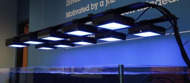BRS/WWC Hybrid Lobby Tank Lighting Grid