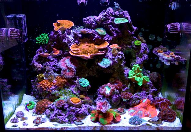 LED lit Reef Tank