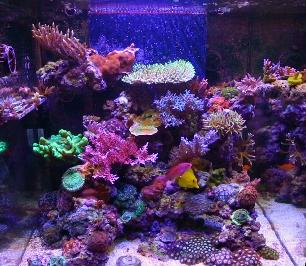 Mixed reef aquarium lit with LED light