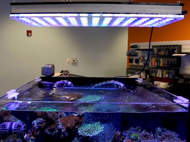 Orphek Atlantik LED over a reef tank