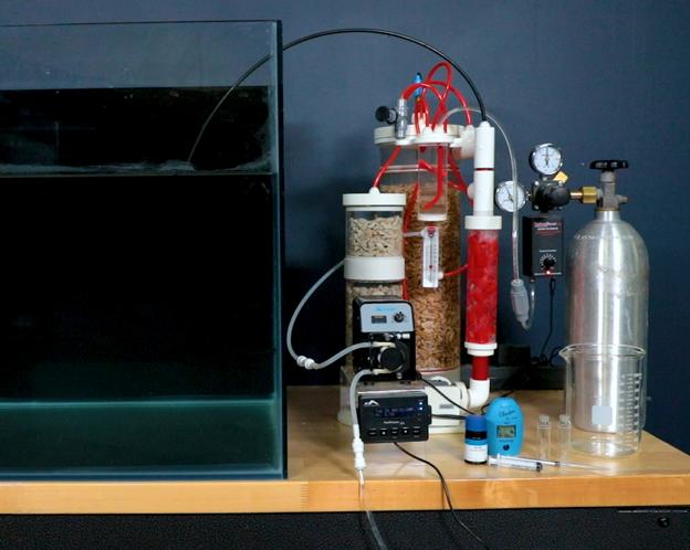 Advanced calcium reactor setup