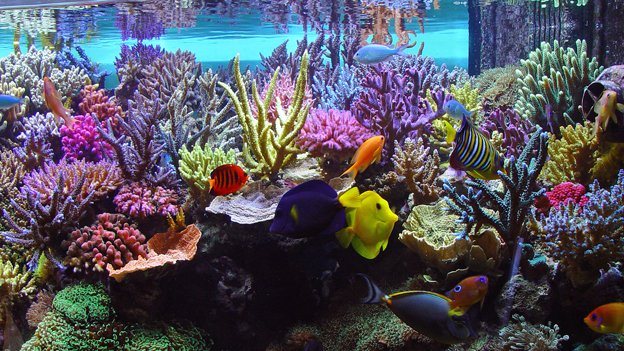 SPS dominate reef tank with a high demand for calcium and alkalinity