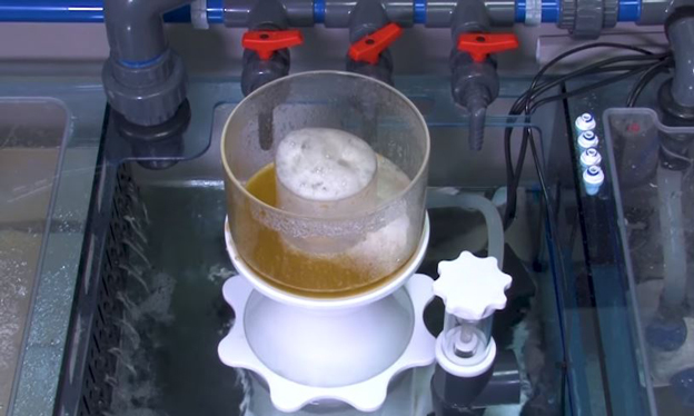Foam head inside a protein skimmer collection cup