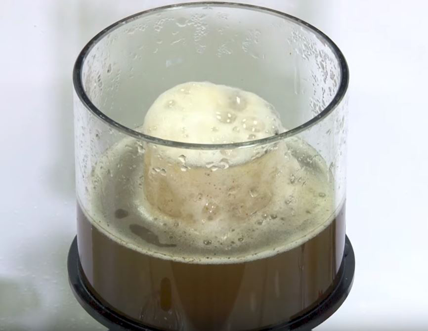 Protein skimmer foam head inside a collection cup