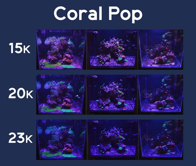 Coral Pop Images