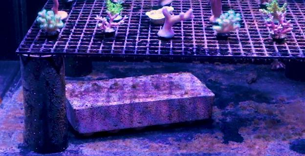 Brightwell Aquatics Xport Bio Brick