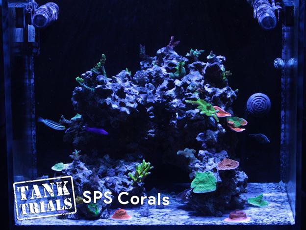 Ultra Low Maintenance SPS Coral Tank