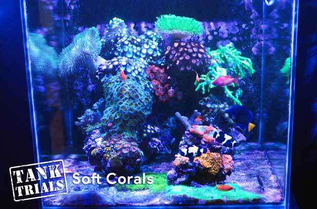 Ultra Low Maintenance Soft Coral Tank