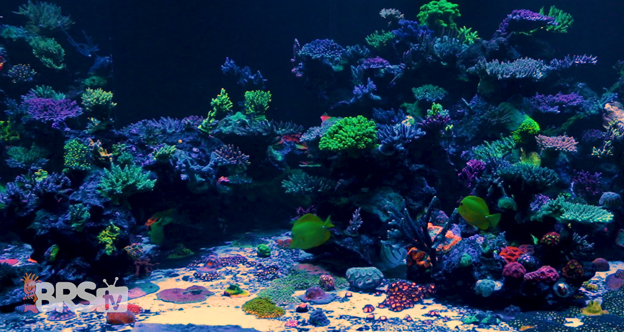World Wide Coral tank
