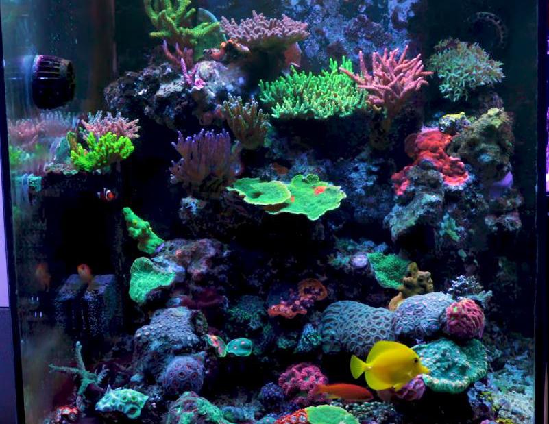 Zacks office aquarium