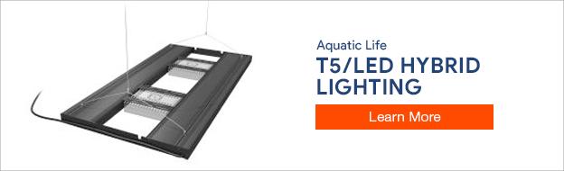 Aquatic Life Hybrid Lighting
