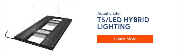 T5-LED Hybrid Lighting