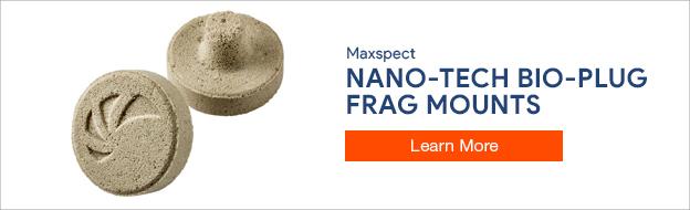 Maxspect Nano-Tech Bio Plugs